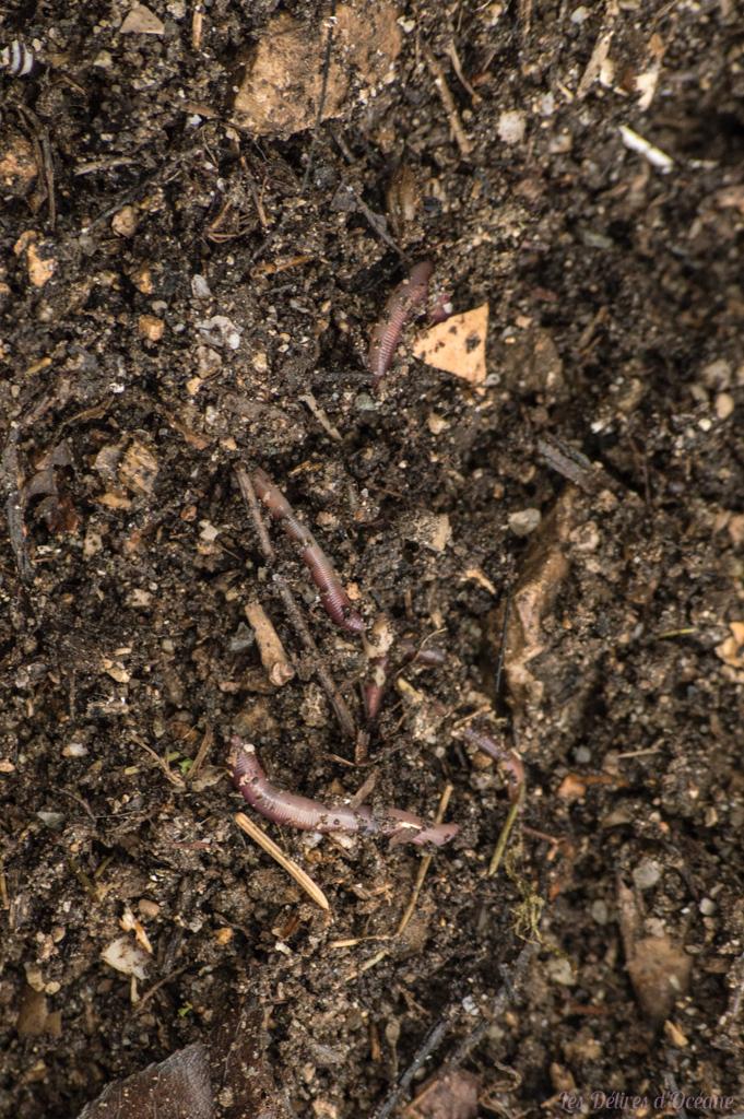 compost présentation de la permaculture ver de terre